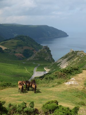 Stay At Boreat Manor And Visit Exmoor National Park