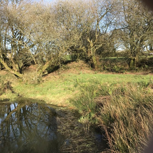 Wildlife Pond Surrounded By Pebbles: Looking After The Countryside